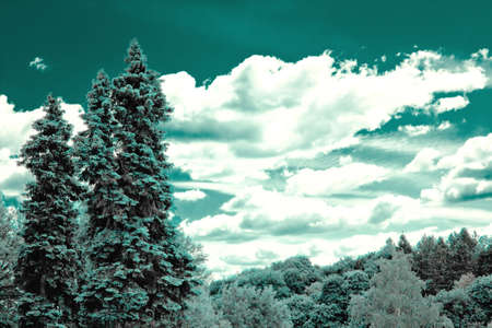 dichromatic: Forest landscape on sky background