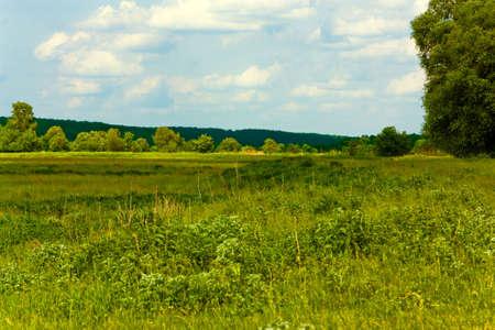 Paisaje con bosques y praderas Foto de archivo - 5304445