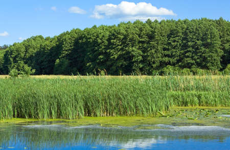 Countryside landscape with little river Stock Photo - 6339569
