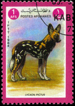 lycaon pictus: AFGHANISTAN - CIRCA 1984: A Stamp shows image of a African hunting dog with the inscription Lycaon pictus, series, circa 1984