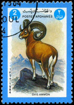 AFGHANISTAN - CIRCA 1984: A Stamp shows image of a Argali with the inscription Ovis ammon, series, circa 1984 photo