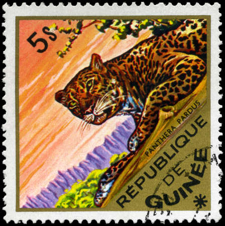 panthera pardus: GUINEA - CIRCA 1975: A Stamp shows image of a Leopard with the inscription panthera pardus, series, circa 1975 Stock Photo