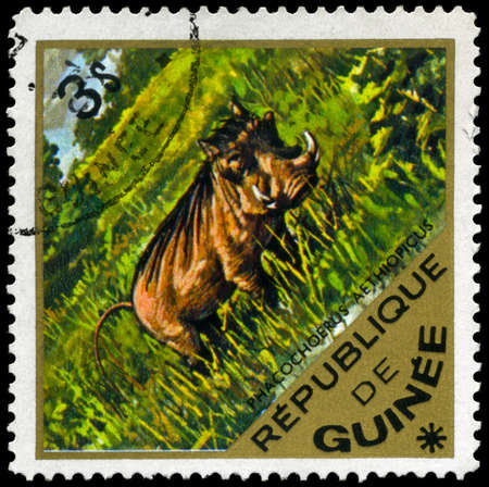 wart: GUINEA - CIRCA 1975: A Stamp shows image of a Wart Hog with the inscription phacochoerus aethiopicus, series, circa 1975