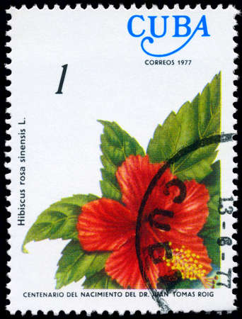 chinese postage stamp: CUBA - CIRCA 1977: A Stamp shows image of a Hibiscus with the inscription Hibiscus rosa sinensis L., from the series centenary of the birth of dr. Juan Tomas Roig, circa 1977