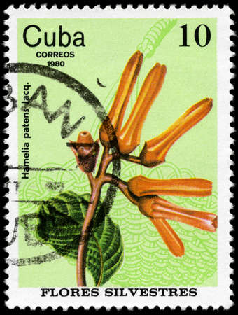 wattle: CUBA - CIRCA 1980: A Stamp shows image of a Flower with the inscription Hamelia  patens Jacq., from the series wild flowers, circa 1980 Stock Photo
