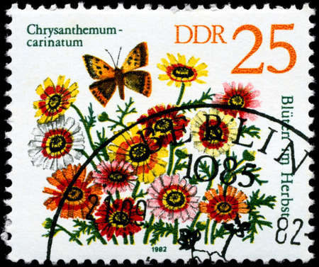 GDR - CIRCA 1982: A Stamp shows image of a Chrysanthemum with the inscription Chrysanthemum - carinatum, from the series Autumn Flowers, circa 1982 photo