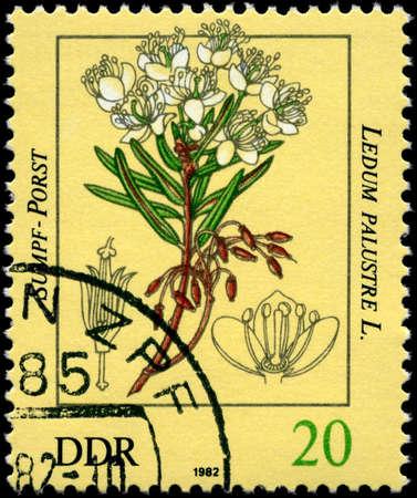 palustre: GDR - CIRCA 1982: A Stamp shows image of a Ledum with the inscription Ledum palustre L., series, circa 1982