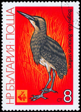 bittern: BULGARIA - CIRCA 1981: A Stamp shows image of a Great Bittern with the inscription