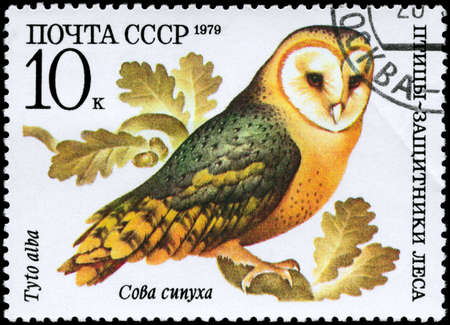 USSR - CIRCA 1979: A Stamp shows image of a Barn Owl with the inscription Tuto alba from the series Birds - defenders of forest, circa 1979 photo