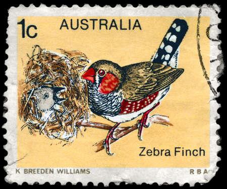 AUSTRALIA - CIRCA 1979: A Stamp shows image of a Zebra Finch from the series Australian birds, circa 1979 photo