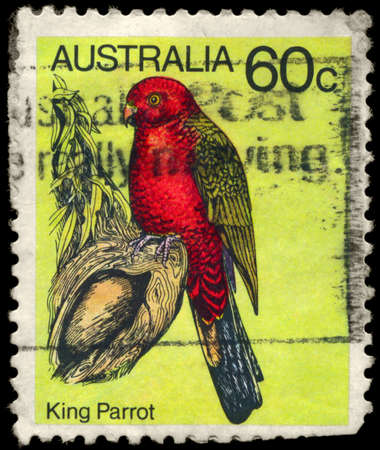 king parrot: AUSTRALIA - CIRCA 1980: A Stamp shows image of a King Parrot from the series Australian birds, circa 1980
