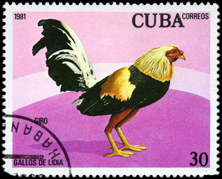 fighting cock: CUBA - CIRCA 1981: A Stamp shows image of a Rooster with the designation Giro from the series Fighting Cocks, circa 1981