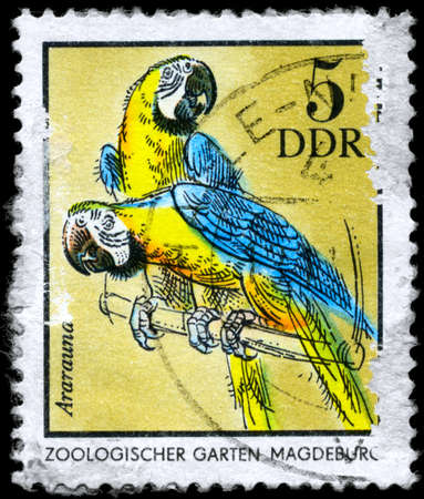 GDR - CIRCA 1975: A Stamp shows image of a blue and yellow Macaws with the inscription