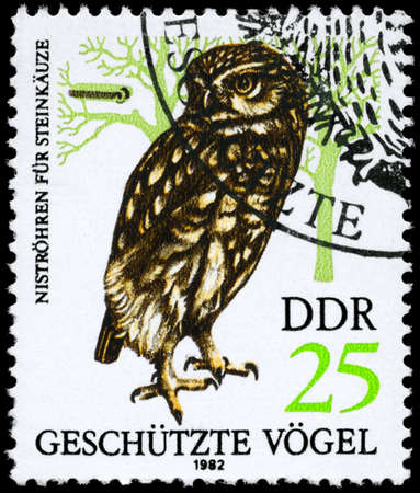 GDR - CIRCA 1982: A Stamp shows image of a Eagle Owl from the series Protected birds, circa 1982 photo