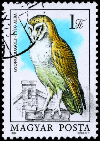 HUNGARY - CIRCA 1984: A Stamp shows image of a Barn Owl with the inscription Tyto alba from the series Owls, circa 1984 photo