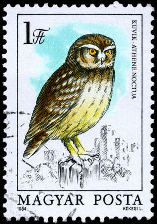 HUNGARY - CIRCA 1984: A Stamp shows image of a Little Owl with the inscription