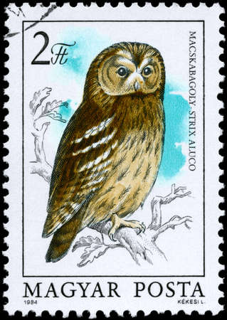 HUNGARY - CIRCA 1984: A Stamp shows image of a Tawny Owl with the inscription Strix aluco from the series Owls, circa 1984 photo