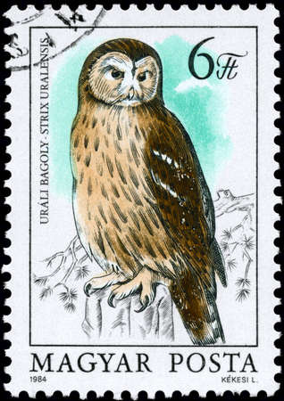 ural owl: HUNGARY - CIRCA 1984: A Stamp shows image of a Ural Owl with the inscription Strix uralensis from the series Owls, circa 1984