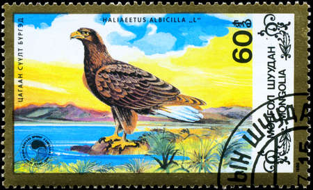 wildlife conservation: MONGOLIA - CIRCA 1988: A Stamp shows image of a Eagle facing left with the inscription Haliaeetus albicilla from the series Wildlife Conservation, circa 1988 Stock Photo