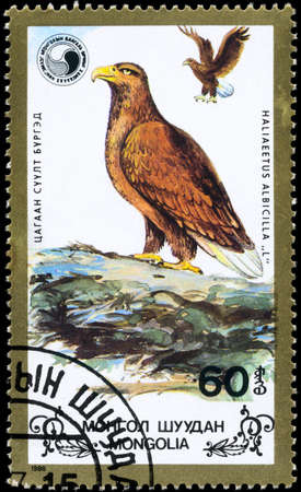 wildlife conservation: MONGOLIA - CIRCA 1988: A Stamp shows image of a Eagles with the inscription Haliaeetus albicilla from the series Wildlife Conservation, circa 1988