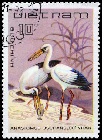 VIETNAM - CIRCA 1983: A Stamp shows image of a Asian Openbill Stork with the inscription