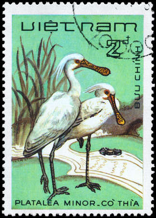 VIETNAM - CIRCA 1983: A Stamp shows image of a Black-faced Spoonbill with the inscription