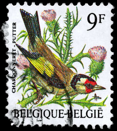 BELGIUM - CIRCA 1985: A Stamp shows image of a Goldfinch, circa 1985 Stock Photo - 8880394