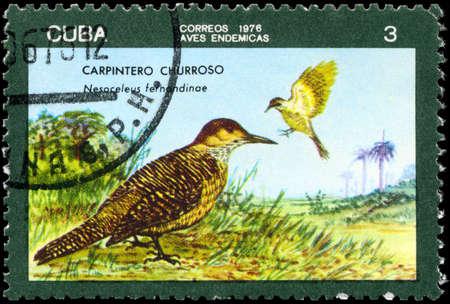tremolare: CUBA - CIRCA 1976: A timbro stampato in CUBA mostra immagine di sfarfallio di un Fernandina con la denominazione Nesoceleus fernandinae della serie Uccelli indigeni, circa 1976