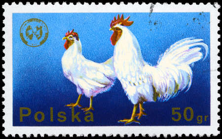 POLAND - CIRCA 1975: A Stamp shows image of a Cock and Hen from the series  Stock Photo - 8880481
