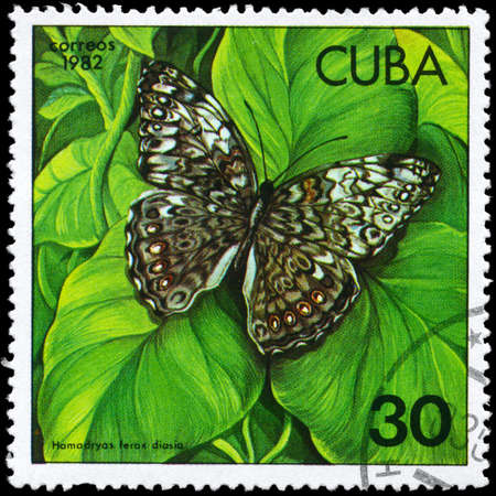 cuba butterfly: CUBA - CIRCA 1982: A Stamp printed in CUBA shows image of a Butterfly with the description Hamadryas ferox diasia, series, circa 1982  Stock Photo
