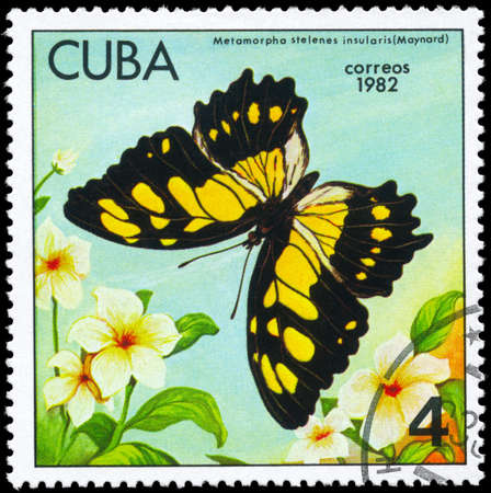 cuba butterfly: CUBA - CIRCA 1982: A Stamp printed in CUBA shows image of a Butterfly with the description Metamorpha stelenes insularis, series, circa 1982