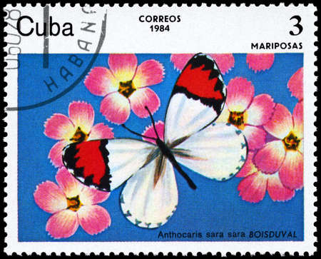 cuba butterfly: CUBA - CIRCA 1984: A Stamp printed in CUBA shows image of a Butterfly with the description Anthocaris sara, series, circa 1984  Stock Photo