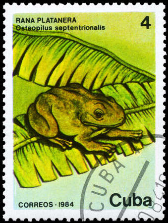 CUBA - CIRCA 1984: A Stamp printed in CUBA shows image of a Frog with the description Osteopilus septentrionalis from the series Fauna, circa 1984 photo