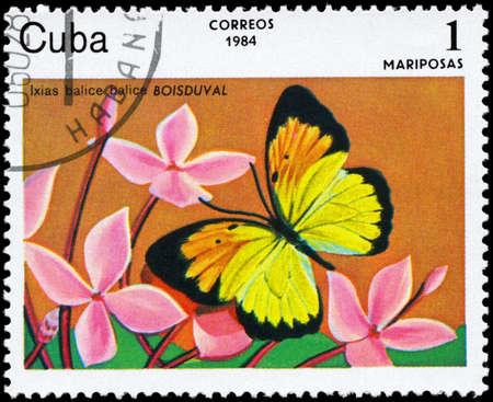 """CUBA - alrededor de 1984: A sello impreso en CUBA muestra imágenes de una mariposa con la descripción """"Ixias balice"""", serie, alrededor de 1984"""