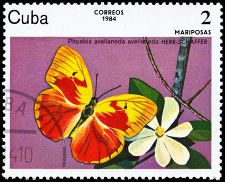 cuba butterfly: CUBA - CIRCA 1984: A Stamp printed in CUBA shows image of a Butterfly with the description Phoebis avellaneda, series, circa 1984  Stock Photo