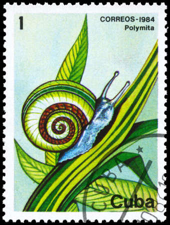 ostracean: CUBA - CIRCA 1984: A Stamp printed in CUBA shows image of a Snail with the description Polymita from the series Fauna, circa 1984