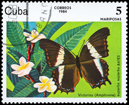 cuba butterfly: CUBA - CIRCA 1984: A Stamp printed in CUBA shows image of a Butterfly with the description Victorina (Amphirene), series, circa 198