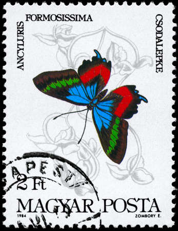 perforated stamp: HUNGARY - CIRCA 1984: A Stamp printed in HUNGARY shows image of a Butterfly with the description Ancylusis formossissima, series, circa 1984