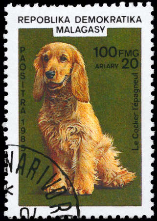 MALAGASY REPUBLIC - CIRCA 1985: A Stamp printed in MALAGASY shows image of a Cocker Spaniel from the series Cats and Dogs, circa 1985 photo
