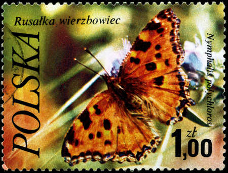 nymphalis: POLAND - CIRCA 1977: A Stamp printed in POLAND shows image of a Large Tortoiseshell with the inscription Nymphalis polychloros from the series Butterflies, circa 1977