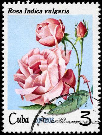 """CUBA - alrededor de 1979: Sello A muestra imágenes de una rosa con la inscripción """"rosa indica vulgar"""", serie, alrededor de 1979"""