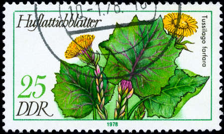 """RDA - alrededor de 1978: Sello A imagen de muestra de un tusílago con la designación """"Tussilago farfara"""" de la serie """"Plantas medicinales"""", alrededor de 1978"""