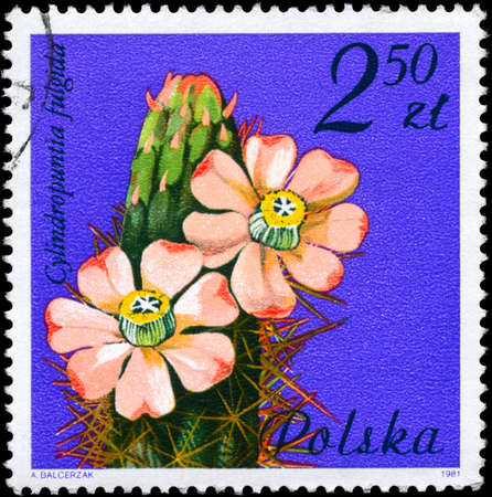 cholla: POLAND - CIRCA 1981: A Stamp shows image of a Jumping Cholla with the designation Cylindropuntia fulgida from the series Flowering Succulent Plants, circa 1981 Stock Photo