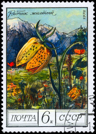 collina: USSR - CIRCA 1976: A Stamp shows image of a Yellow Fritillary with the designation Fritillaria collina, series, circa 1976 Stock Photo