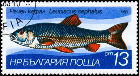 limnetic: BULGARIA - CIRCA 1983: A Stamp printed in BULGARIA shows image of a European Chub with the description Leuciscus cephalus from the series Fresh-water Fish, circa 1983 Stock Photo
