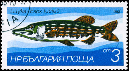 pickerel: BULGARIA - CIRCA 1983: A Stamp printed in BULGARIA shows image of a Pike with the description Esox lucius from the series Fresh-water Fish, circa 1983 Stock Photo