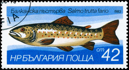 brook trout: BULGARIA - CIRCA 1983: A Stamp printed in BULGARIA shows image of a Brown Trout with the description Salmo trutta fario from the series Fresh-water Fish, circa 1983