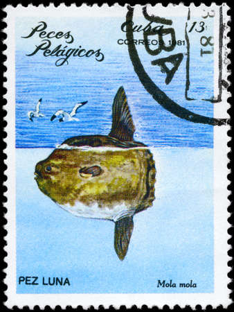 CUBA - CIRCA 1981: A Stamp printed in CUBA shows image of a Ocean Sunfish with the inscription