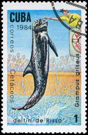 grampus: CUBA - CIRCA 1984: A Stamp printed in CUBA shows image of a Rissos Dolphin with the description Grampus griseus from the series Marine Mammals, circa 1984 Stock Photo