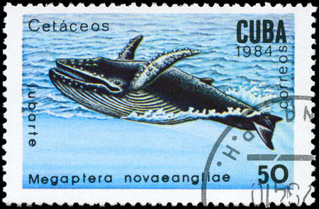 baleen whale: CUBA - alrededor de 1984: A sello impreso en CUBA muestra im�genes de una ballena jorobada con la descripci�n Megaptera novaeangliae de la serie Los mam�feros marinos, alrededor de 1984